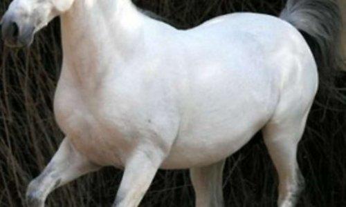 Non à la maltraitance des chevaux