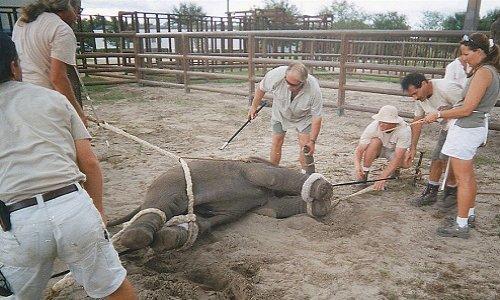 NON aux cirques avec animaux à Veigy-Foncenex
