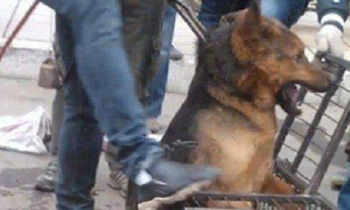 Pour que la FIFA empêche le massacre des chiens errants dans les pays candidats ou recevant la coupe du monde!