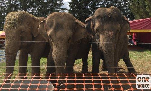 Pétition : Pour que Mina et Kamala soient retirées du cirque et placées en sanctuaire! #CirquesSansAnimaux