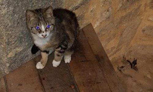 Aidons les chats errants du Mont-Saint-Michel (dép. 50)