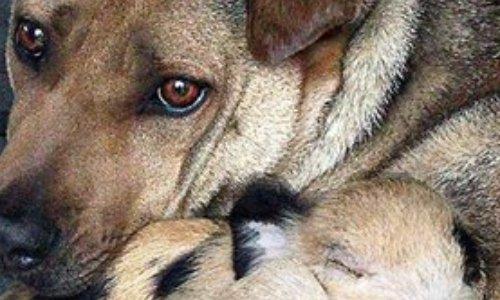 Abolir la taxe sur les soins animalier