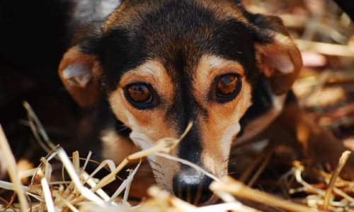 Pétition : 450 chats et 70 chiens, dans le Var, en danger par arrêt arbitraire de subvention