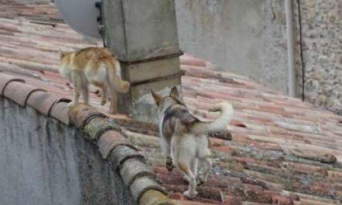 Drôle de vie pour des chiens