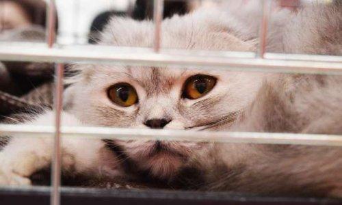 Aidez-moi à stopper ces atrocités gratuites dans un hôpital au Maroc qui tuent les chats en leur donnant du poison.