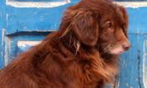 Pétition : Luttons contre  la cruauté animale et qu'on arrête d'empoissioner chat et chiens errants au Maroc.
