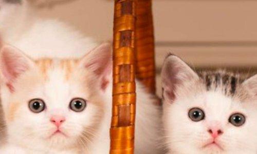 Notre association pour la protection des chiens et chats