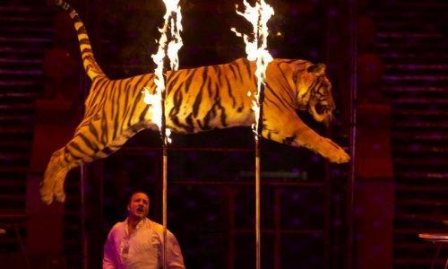 Interdiction des cirques d'animaux sauvages à Aulnay-sous-Bois