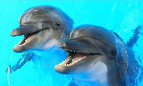 Fondation marineland pour la reproduction du bien être de nos animaux