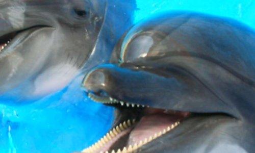 Pétition : Fondation marineland pour la reproduction pour leur bien-être de nos animaux