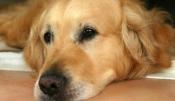 Pétition : Urgent : Sauvons Bobie, petite chienne du cimetière de Bobigny