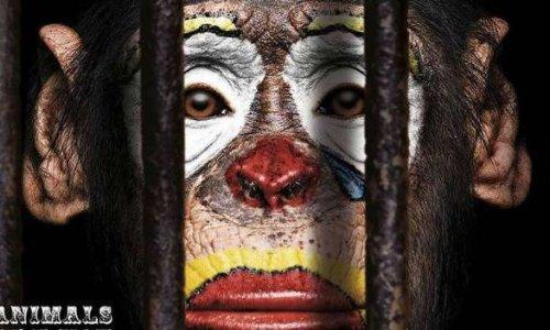 Stop aux cirques avec animaux dans l'agglomération Montargoise