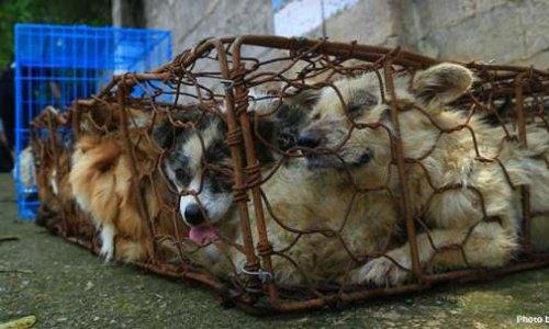 Contre le cruel Festival de viande de chien à  Yulin