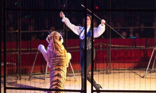 Domont dit oui aux cirques sans animaux