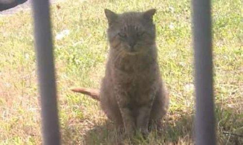 Pétition : Sauvons les chats de l'INA !