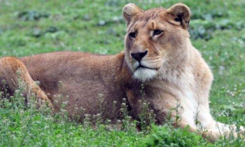 Contre l'abattement des animaux dans les zoos