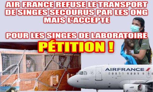 Demandons à AIR FRANCE de privilégier le transport des singes secourus par les ONG et de cesser celui des singes destinés aux laboratoires d'expérimentation animale !