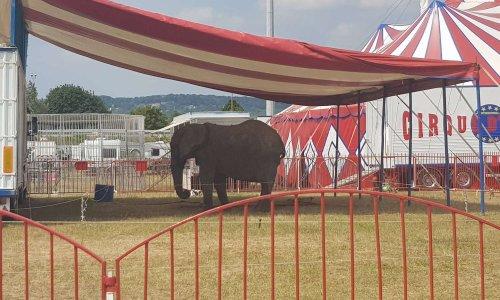 Pour des cirques sans animaux à Flins-sur-Seine
