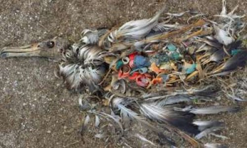 Pétition : STOP PLASTIQUE : agissons ensemble