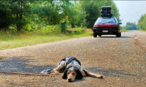 Lutter contre l'abandon des chiens