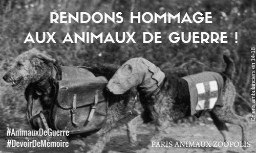 Rendons hommage aux animaux de guerre