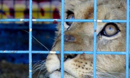 Non aux cirques avec animaux à Hyères