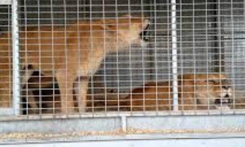 Pour des cirques sans animaux à Neuilly-sur-Marne