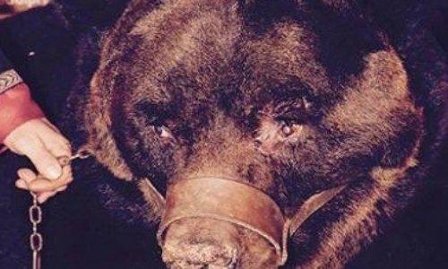 Cirques : Pour que cesse l'esclavage des animaux !