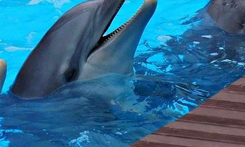 Pétition  non à l arrêt du célèbre spectacle des dauphins
