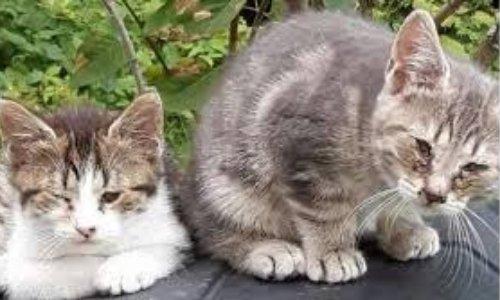 Pour une campagne de stérilisation des chats