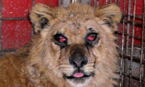Pétition : Pour que la ville de Scionzier refuse l'installation du cirque