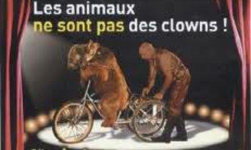 STOP aux cirques avec des animaux à Talmont 85