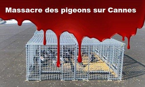 Stop au massacre des pigeons sur Cannes