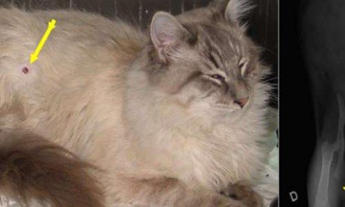 A Istres les chats sont maltraités, tués, empoisonnés. STOP à ces maltraitants