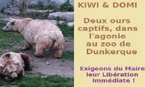 """Servitude Involontaire au zoo de Dunkerque, pour deux ours, Kiwi, star du film """"l'Ours"""", et son compagnon Domi, asservis par le Maire, sur l'autel de l'intérêt pécuniaire"""