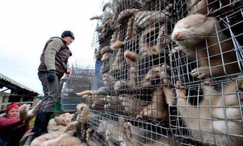 Pétition : FENDI- Stop à la fourrure animale