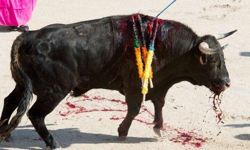 Arrêtons l'idéologie du toros de corridas