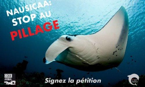 Stop au pillage des mers et des océans !