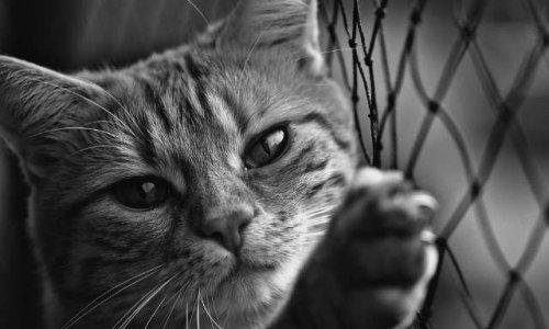 NON à la fourrière animale pour les chats errants à Ancy-Dornot (57130)
