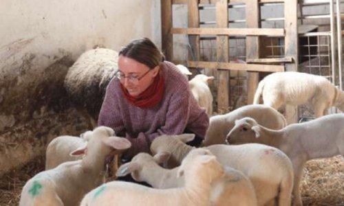 Pour la sauvegarde des soins traditionnels dans les élevages !