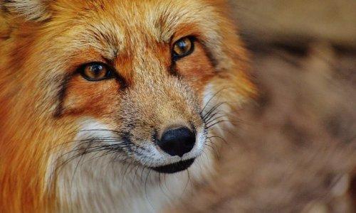 Amis des animaux une seule voix pour les défendre