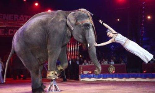 Pétition : Pour interdire le cirque avec animaux à Honfleur