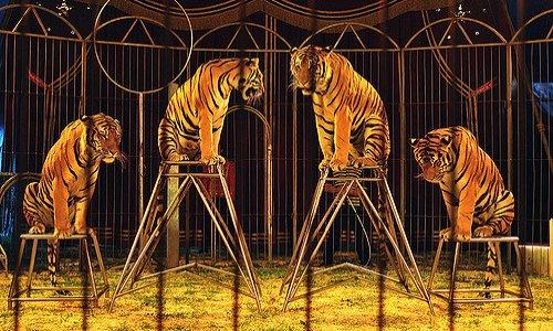 Non aux cirques avec animaux à Montélimar !