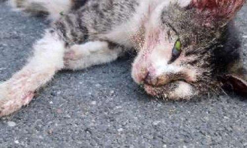 Justice pour Princesse tuée par les crocs des chiens