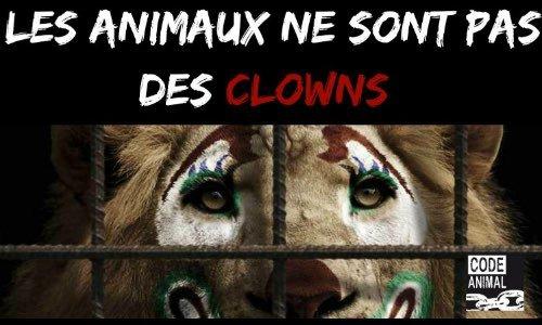 Stop aux cirques avec animaux à Erquy
