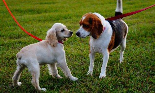 Sauvegarde du parc à chiens Petit-Bois de Balexert