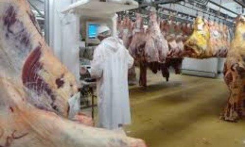 Luttons contre le massacre des abattoirs