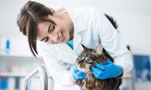 Pétition : Urgence pour la création d'un Centre de Formation aux Métiers du Bien-être et de la Santé Animale dans le Var.