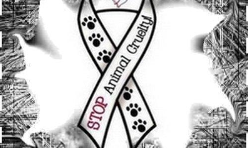 Permis et droit pour les animaux