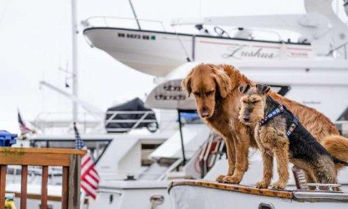 Créer un endroit pour les chiens sur le traversier des îles de la Madeleine